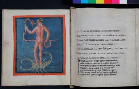 """""""Phénomènes"""" de Leiden : la constellation du Serpentaire (photographie : Laetitia Lorgeoux)."""