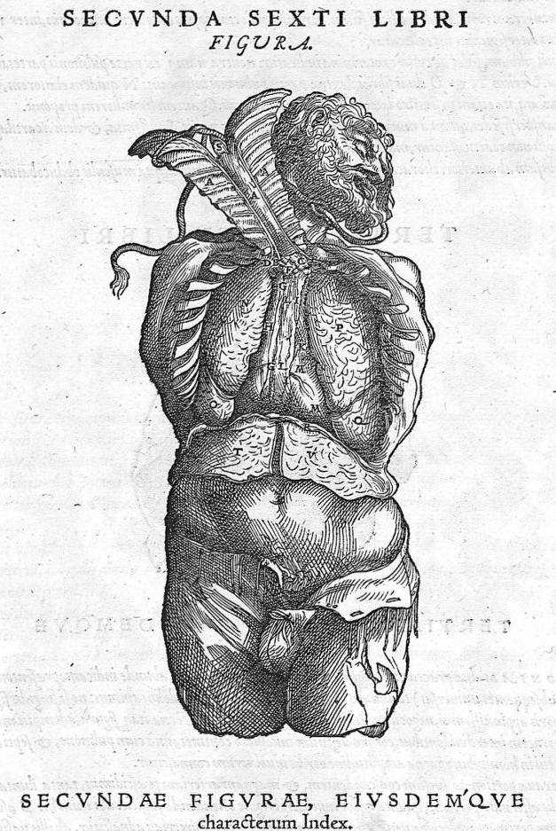 """André VESALE, """"Secunda sexti libri figura"""" in """"De humanis corporis fabrica"""", Bâle, J. Oporinus, 1543 (source : BIU de Santé, Université Paris-Descartes)."""