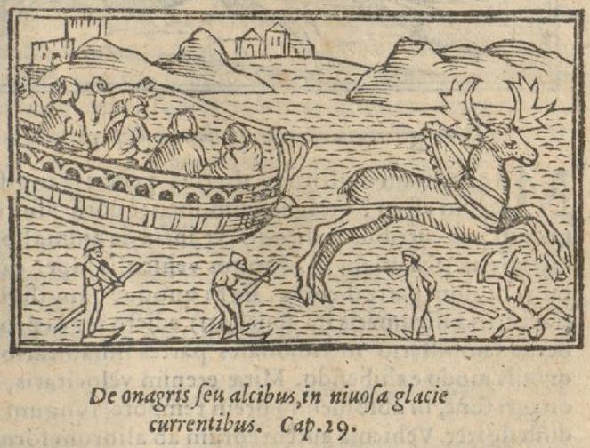 """""""Ânes et élans courant sur la glace enneigée"""", gravure tirée de l'""""Historia de gentibus septentrionalibus"""" d'Olaus Magnus, Anvers, Joannes Bellerus, 1562."""
