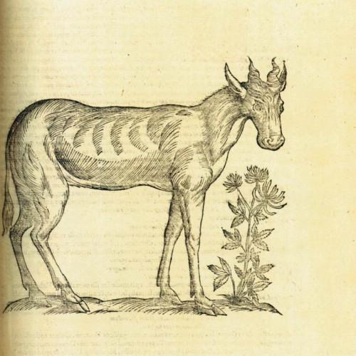 L'animal en images (XVIe-XVIIIe siècles)