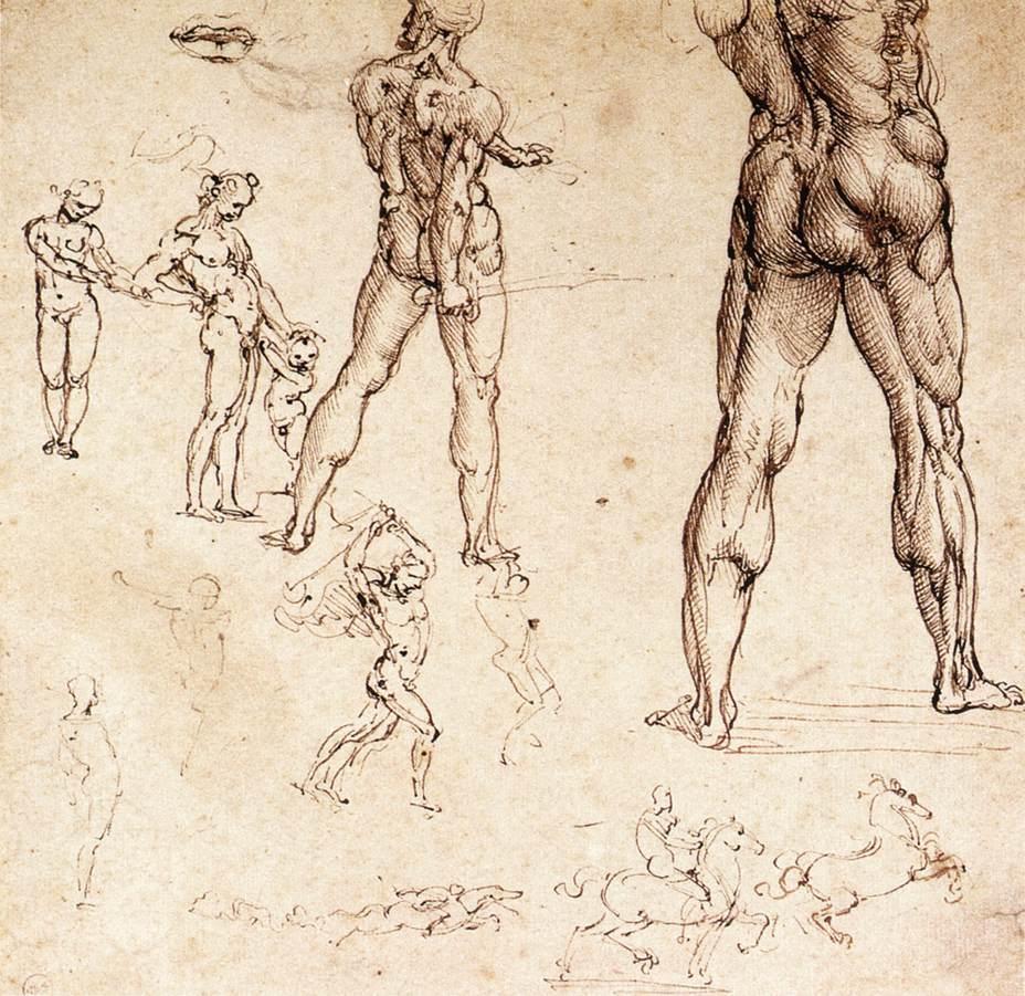 """Léonard de Vinci, """"Etudes anatomiques"""", (1504-06), Turin, Biblioteca Reale (source : WGA)."""