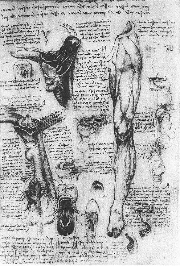 """Léonard de Vinci, """"Etudes anatomiques (larynx et jambe)"""", 1510, Windsor, Bibliothèque royale (source : WGA)."""