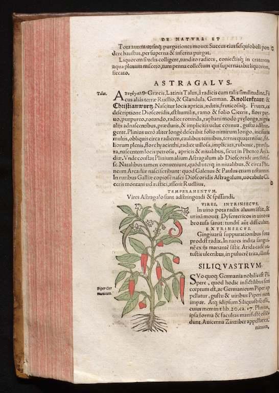 Adam Lonicer, Botanicon, plantarum historiae, cumearrundem ad vivum artificiose expressis iconibus, to mi duo, Haeredes, Francfort, 1565, (source : Hortalia)