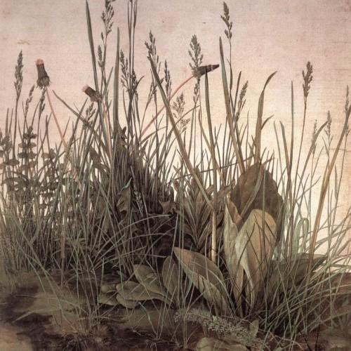 Rabelais et la botanique